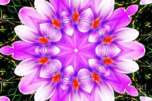 Floral Kaleidoscope by Judy Palkimas