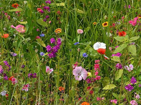 Bishopston Fine Art - Floral Meadow