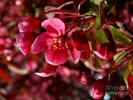 Scott B Bennett - floral343a