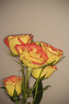 Flores de mi suenos 4 by Pablo Rivera