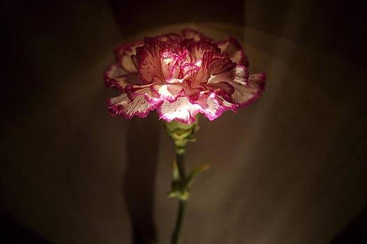 Flores de mi suenos 7 by Pablo Rivera