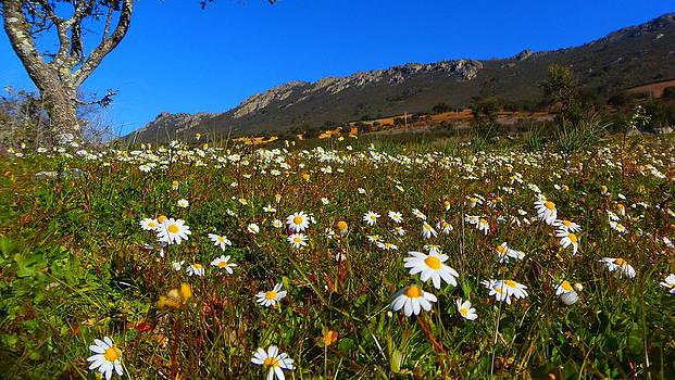 Flores by Nando Montes