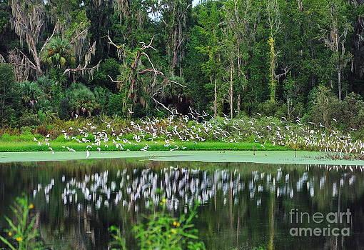 Wayne Nielsen - Florida Flight of the Egret Flock