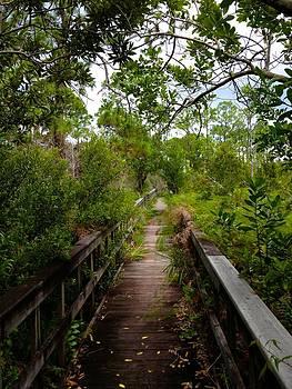 Florida Foliage by K Simmons Luna