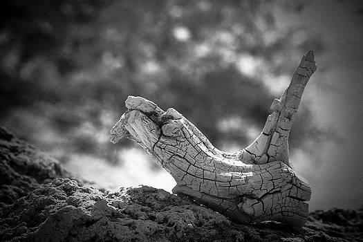 Florida Keys Driftwood by Bradley R Youngberg