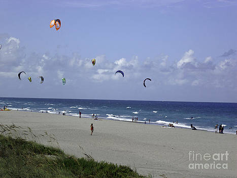 Florida Kites On The Beach by Crissy Anderson