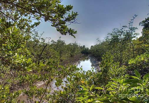 Ines Bolasini - Florida Landscape