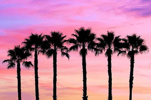Florida Palm Trees by Elizabeth Budd