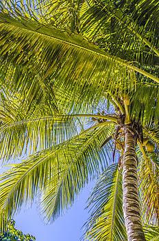 Julie Palencia - Florida Palms