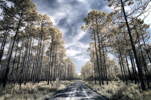 David Morel - Florida Pines Infrared III