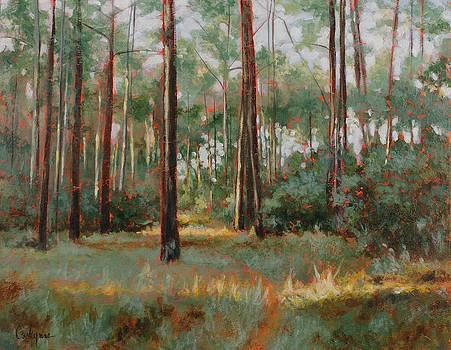 Florida Prairie by Carlynne Hershberger