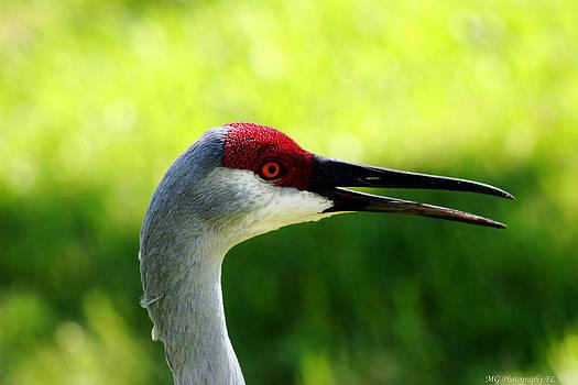 Florida Sandhill Crane by Marty Gayler