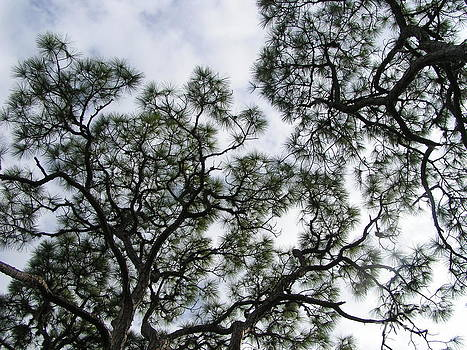 Florida Sky Trees II by Tracy L Teeter