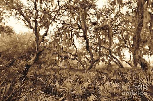 Dan Friend - Florida spanish moss and bush palmetto
