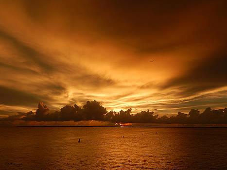 Florida Sunset 007 by Nola Hintzel