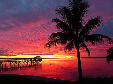 Florida Sunset II by Elaine Franklin
