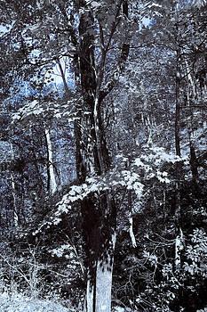 Nina Fosdick - Flow of Leaves