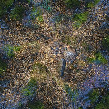 Flow Path by David Phoenix