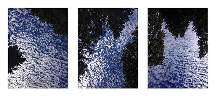 Randal Bruck - Flow Triptych