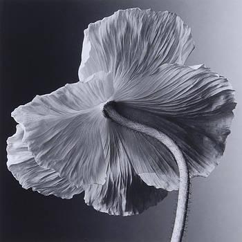 Flower 02 by Haruo Kaneko
