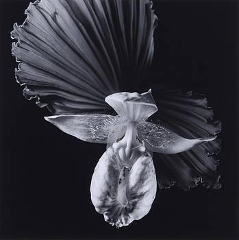 Flower 03 by Haruo Kaneko