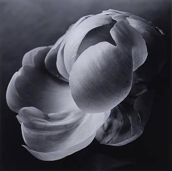 Flower 04 by Haruo Kaneko