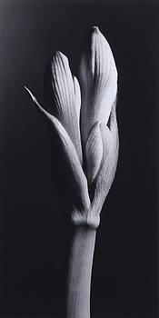 Flower 14 by Haruo Kaneko