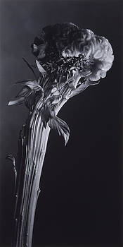 Flower 15 by Haruo Kaneko