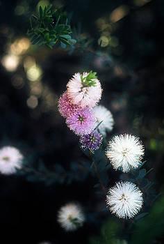Flower 47 by Steven Loyd