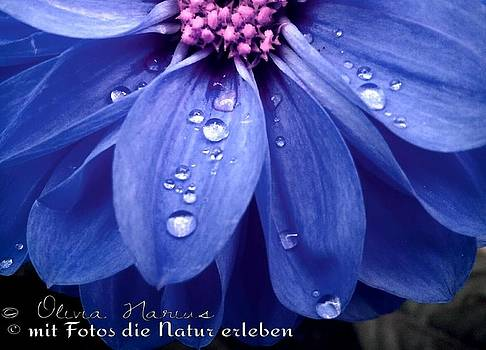Flower and Drops by Olivia Narius