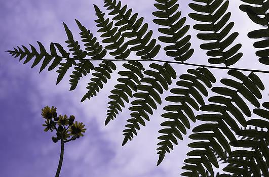 Dawn Hagar - Flower and Fern