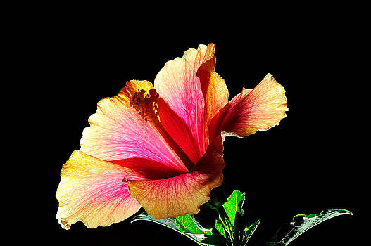 Flower at Night by Marwan Khoury