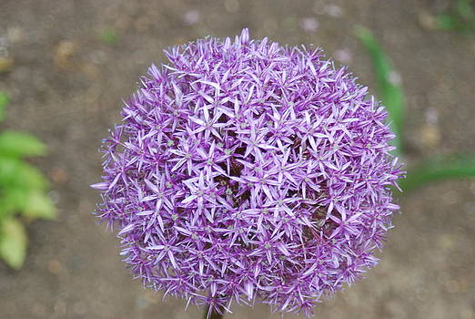 Flower Ball by William  James