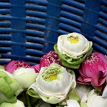 Flower Basket by Marigan O'Malley-Posada