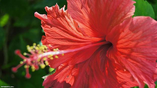 Flower beautiful  by Gornganogphatchara Kalapun