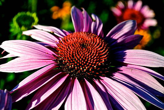 Frozen in Time Fine Art Photography - Flower Bed Close Up