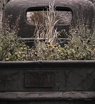 Flower Bed - Nature and Machine by Steven Milner