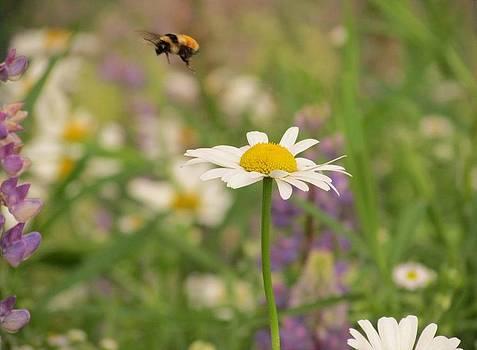 Flower Bee by Dianne Furphy