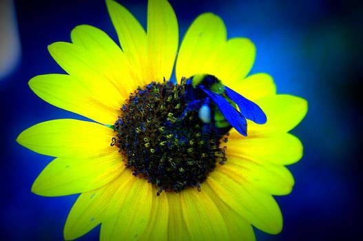 Flower Bee by Kasie Morgan