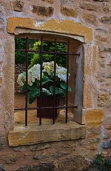 Flower behind bars by Dany Lison