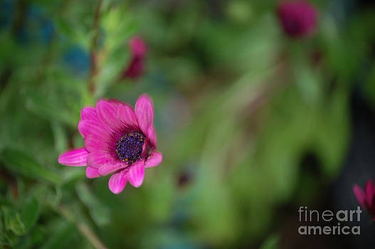Flower Bokeh  by Jordan Rusin