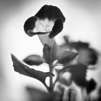 Flower by Bradley R Youngberg