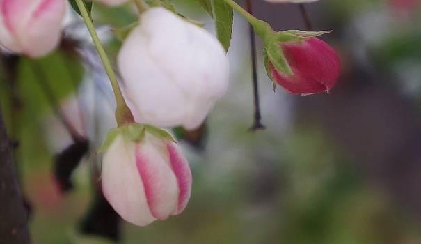 Dawn Hagar - Flower Buds