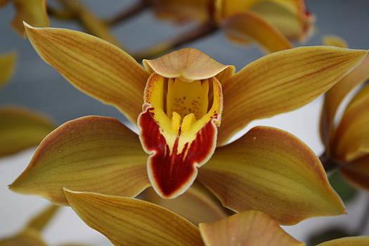 Flower Closeup by Robbie Clayton