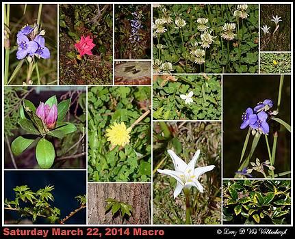 Flower Collage From Starke Florida by Larry Van Valkenburgh