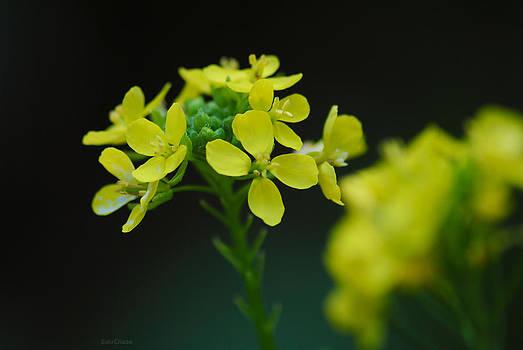 Flower by Diaae Bakri