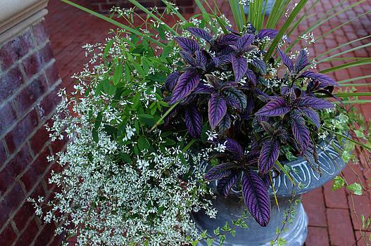 Flower Display by Carolyn Ricks