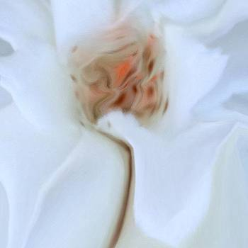 #flower #dream #soft #rose by Teodoro De Jesus