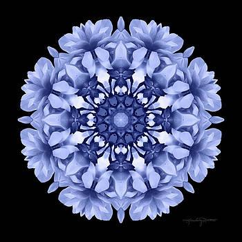 Flower Dreamtime by Karen Casey-Smith