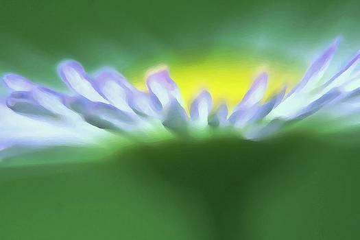 Flower Effect by Rachelle Johnston